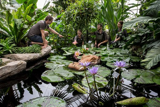 Staff carrying out maitnenace in the Glasshouse pond