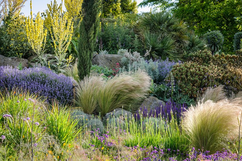 A mix of drought-tolerant plants at RHS Garden Hyde Hall