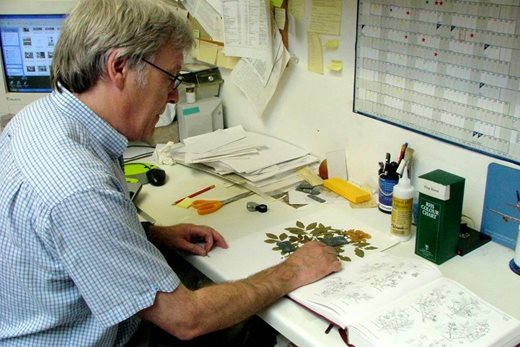 herbarium botanist at work