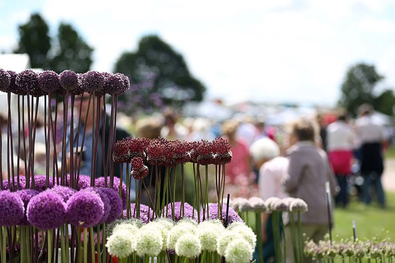 Allium display at Hyde Hall Flower Show