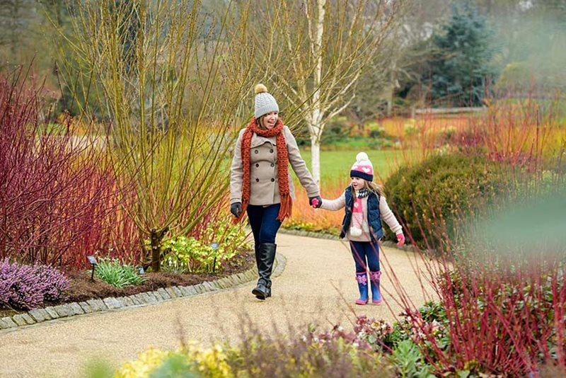 The Winter Walk at RHS Garden Wisley