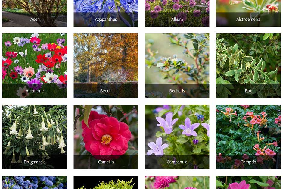 Guide to favourite plants and how to grow them