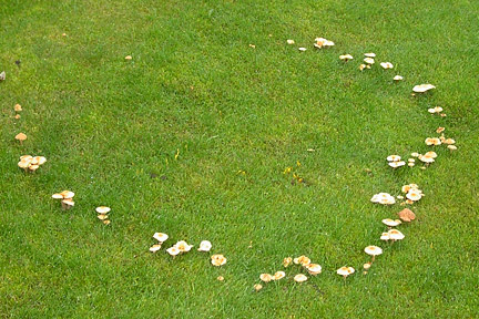 Fairy rings. Image: STRI