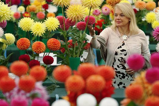 Woman admiring dahlias at Wisley