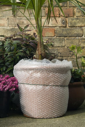 Containers: overwintering plants