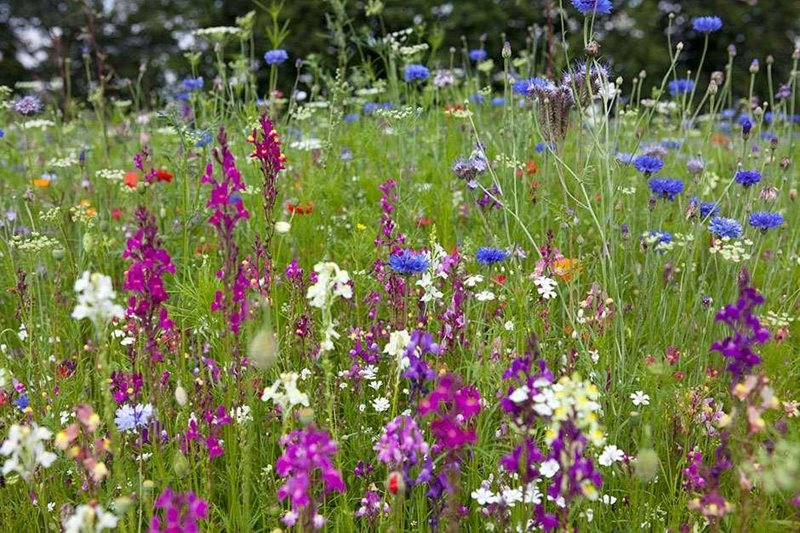 Wildflowers will attract lots of pollinators