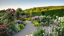 Visit Rosemoor in summer