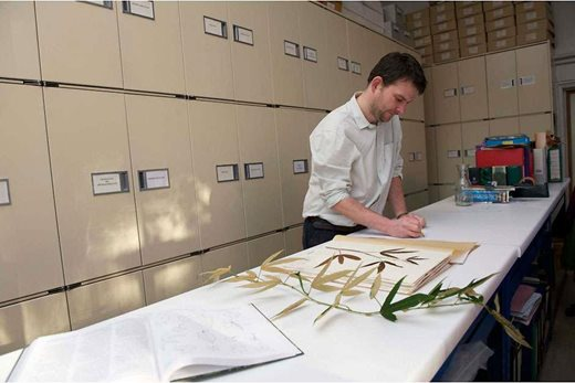 Working with the RHS Herbarium