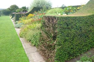 herbaceous border and renovated hedges