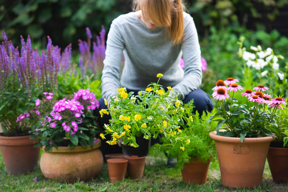 Create a sensory garden / RHS Gardening on vegetable garden design layout, butterfly garden design layout, community garden design layout, rose garden design layout, container garden design layout, herb garden design layout, sensory garden drawing, english garden design layout,