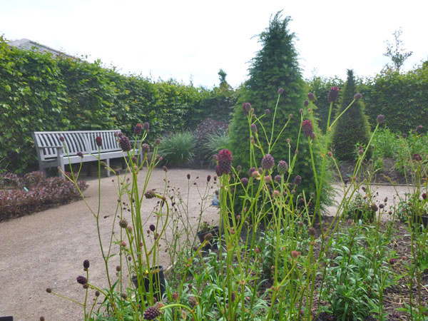 Sanguisorba 'Chocolate Tip' at Hyde Hall