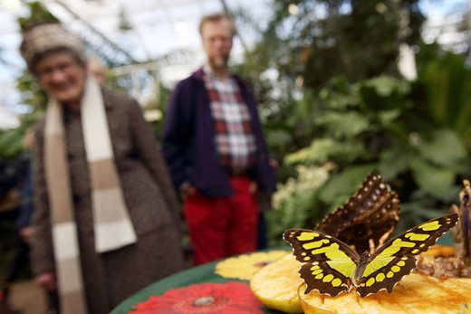 Visitors enjoying Butterflies in the Glasshouse