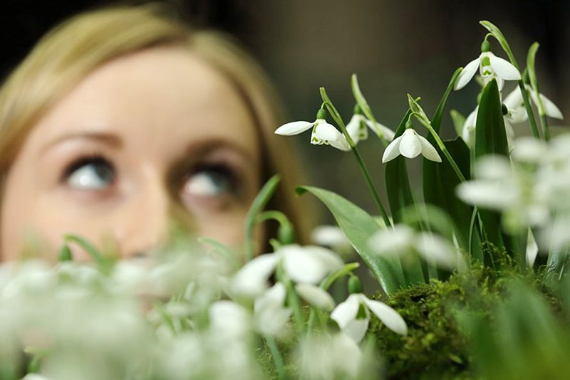 a visitor looking at a snowdrop display