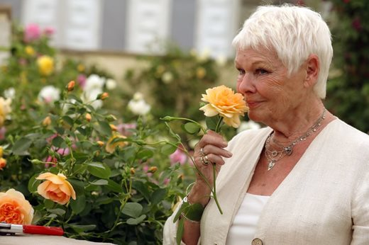 Dame Judy Dench enjoys roses at the RHS Chelsea Flower Show