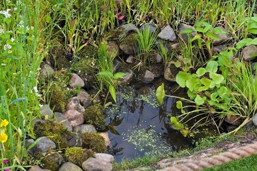 This tiny pond will attract wildlife
